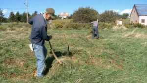 PARNS: Scythe Mowing A Meadow