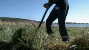Scythe Mowing a Meadow