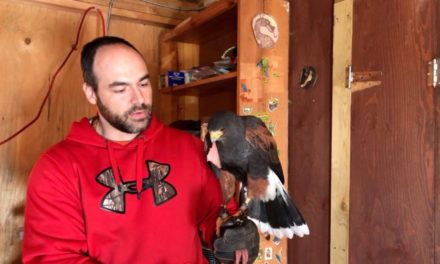 A Falconer and His Hawk