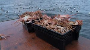 PARNS: Paqtnkek Snow Crab Fishery