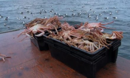 Paqtnkek Snow Crab Fishery